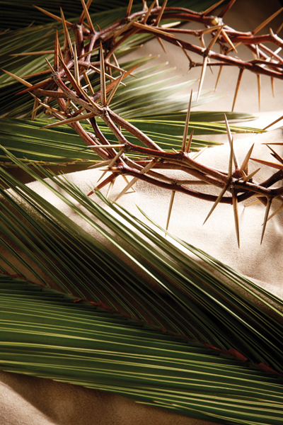 palm frond with crown of thorns
